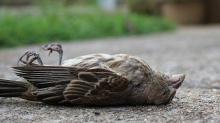 નેધરલેન્ડ ની અંદર 5જી ના પ્રયોગ વખતે ઘણા બધા પક્ષી મૃત્યુ પામ્યા