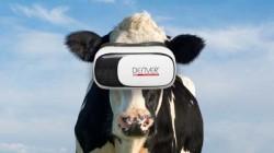 ગાય માટે વર્ચ્યુઅલ રિયાલિટી એ એક હકીકત છે અને તે દૂધના પ્રોડક્શનમાં વધારો કરી શકે છે